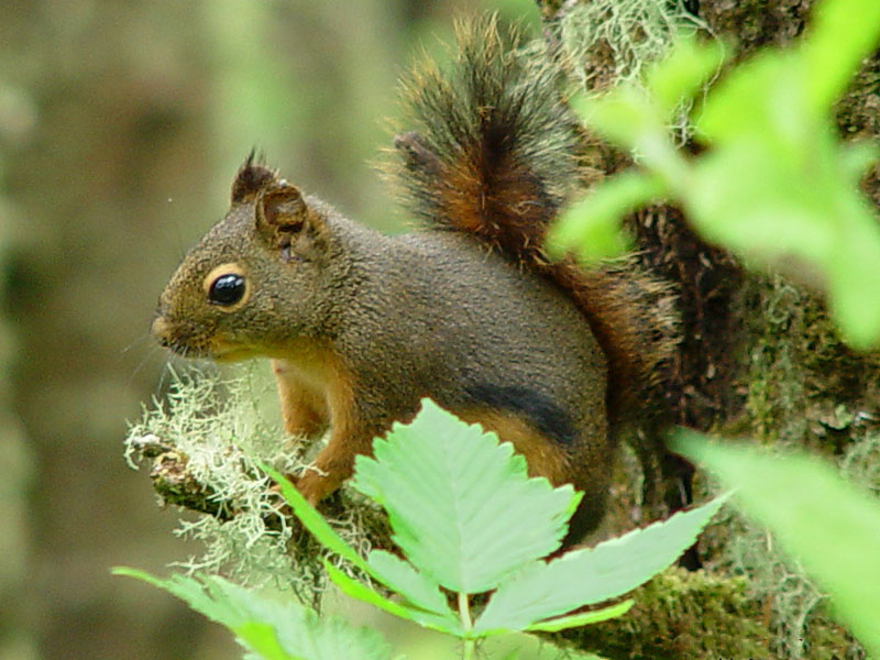 What Type Of Food Does Squirrels Eat
