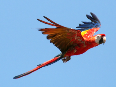 Tropical Birds Flying | www.pixshark.com - Images ...