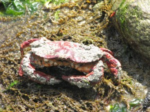 Crabs Live All Over The World